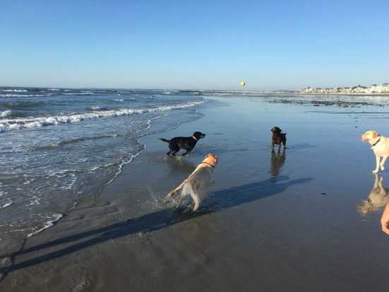 Maine S Dog Friendly Beaches When Dogs Can Be On The